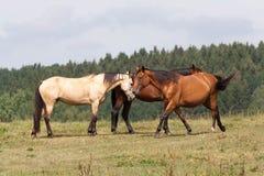 Paard Royalty-vrije Stock Foto's
