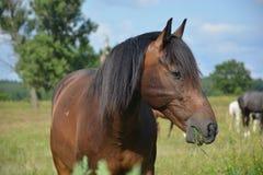 Paard in aard Stock Afbeelding