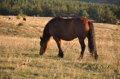 Paard in aard Royalty-vrije Stock Afbeeldingen