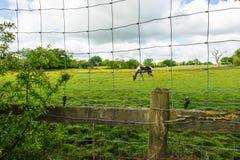 Paard achter de netwerkomheining Stock Foto