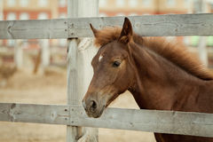 Paard achter de omheining royalty-vrije stock foto
