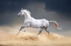 Paard Akhal die in woestijn lopen royalty-vrije stock afbeeldingen