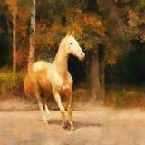 Paard akhal-Teke Stock Foto's
