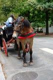 Paard & met fouten Royalty-vrije Stock Fotografie