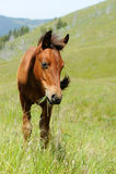 Paard in berg Royalty-vrije Stock Foto's