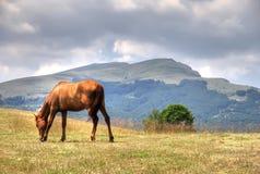 Paard in berg Stock Afbeelding