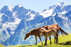 Paard in bergen Stock Afbeelding