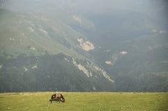 Paard in bergen Stock Fotografie