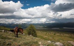 Paard in bergen Sayan Stock Afbeeldingen