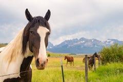 Paard in bergweiland stock afbeeldingen
