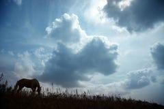 Paard bij de donkere zonsondergang Royalty-vrije Stock Afbeeldingen