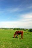 Paard bij de lenteweiland royalty-vrije stock foto