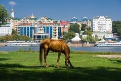 Paard bij de rivier tegen de achtergrond van stad Royalty-vrije Stock Foto's