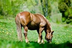 Paard bij de weide stock foto's
