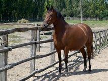 Paard bij een Landbouwbedrijf Stock Foto