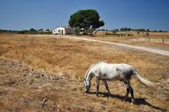 Paard bij het landbouwbedrijf Stock Foto's