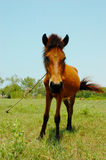 Paard bij het landbouwbedrijf Royalty-vrije Stock Foto