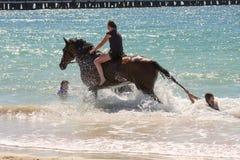 Paard bij het strand stock foto's
