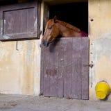 Paard bij het venster Stock Afbeeldingen
