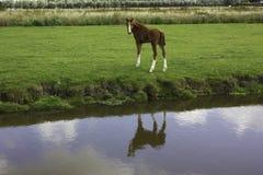Paard bij landbouwbedrijf stock fotografie