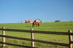 Paard bij landbouwbedrijf in Transsylvanië Stock Foto's