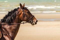 Paard bij Noordzee in De Panne, België Royalty-vrije Stock Afbeelding