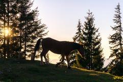 Paard bij zonsondergang Royalty-vrije Stock Afbeeldingen