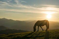 Paard bij zonsondergang Stock Foto's