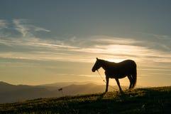 Paard bij zonsondergang Royalty-vrije Stock Afbeelding