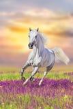 Paard in bloemen in werking die wordt gesteld die Stock Afbeeldingen