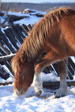 Paard in BosStad Royalty-vrije Stock Afbeeldingen
