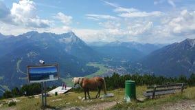 Paard bovenop de Wereld Royalty-vrije Stock Foto's