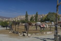 Paard, cappadocia, aard, Turkije royalty-vrije stock foto