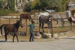 Paard, cappadocia, aard, Turkije stock fotografie