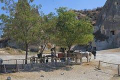 Paard, cappadocia, aard, Turkije stock afbeelding