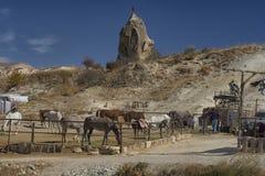 Paard, cappadocia, aard, Turkije royalty-vrije stock afbeelding
