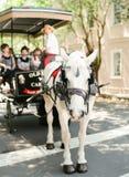 Paard in Charleston Stock Fotografie
