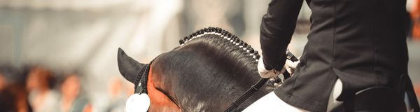 Paard dalbies van in dressuur over de hals erachter wordt gefotografeerd die royalty-vrije stock foto