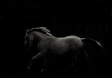 Paard in dark Stock Foto