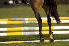 Paard dat 001 springt Stock Afbeeldingen