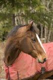 Paard dat achterwaarts kijkt royalty-vrije stock afbeeldingen