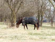 Paard dat Deken draagt Royalty-vrije Stock Foto