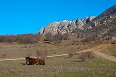 Paard dat dichtbij een landweg ligt Stock Foto's