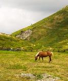Paard dat in een weide eet stock fotografie