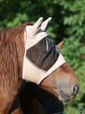 Paard dat het Masker van de Vlieg draagt Stock Foto's