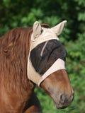 Paard dat het Masker van de Vlieg draagt Stock Afbeelding