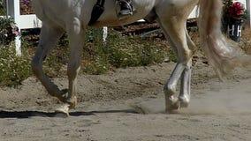 Paard dat in Langzame Motie draaft stock footage