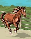 Paard dat op de gebieden loopt Royalty-vrije Stock Afbeeldingen