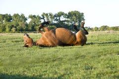 Paard dat op gras rolt stock foto