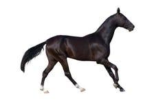 Paard dat op wit wordt geïsoleerdw Royalty-vrije Stock Afbeeldingen